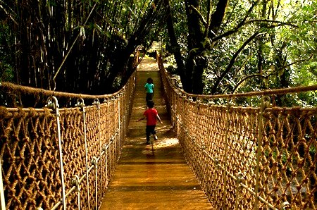 Chitra Aiyer - Kids on the hanging bridge, Vythiri resort