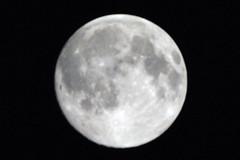 Harvest Moon '09