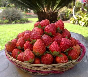 Strawberry Stop Bedugul