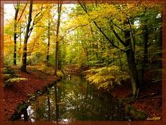 27okt09 Twickelervaart bij Delden. (guus timpers) Tags: autumn water colours beek herfst twente herfstkleuren esch vaart delden azelo supershot deldener bornebroek twickelervaart herfsttinten