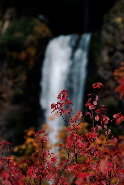 Multnomah Fall Colors