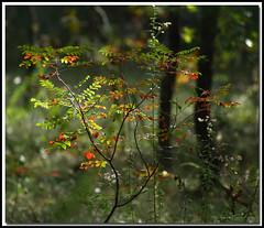 Colors of the Woods (rickm FL) Tags: flowers friends red wild color green fall nature woods naturesfinest anawesomeshot naturescarousel