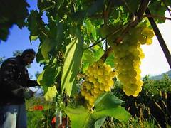 México: Viñedos, ricos en paisaje y sabor