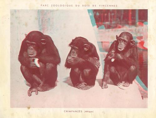 zoorelief p17