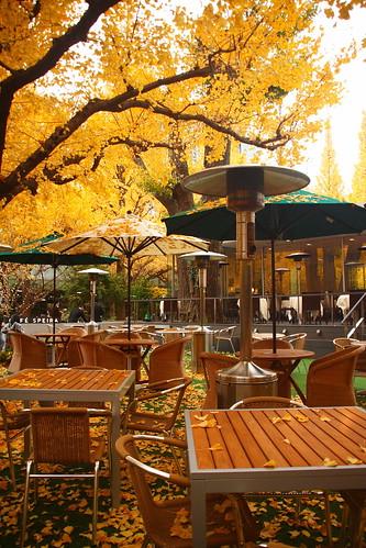 美景中的餐廳
