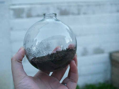 Terrarium Ornament Step 1