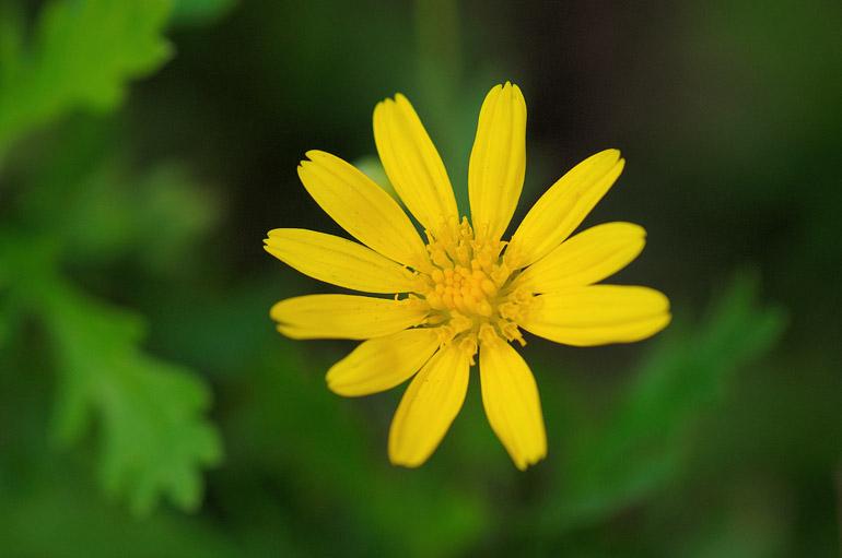 yellow_0085