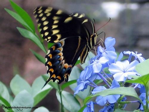 IMG_3055-WDW-DAK-butterfly