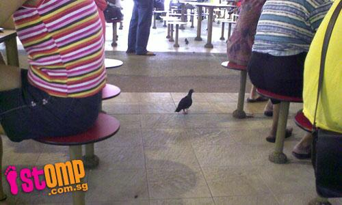 No happy meal at Redhill Hawker Centre with these dirty, pesky birds around