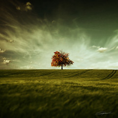 Crude Autumn (swinspeed) Tags: autumn sky blur colour tree art nature field grass clouds digital photoshop square landscape one amazing interesting focus scenery dof meadow surreal center best sharp level single crop gradient land tone sharpness swinspeed