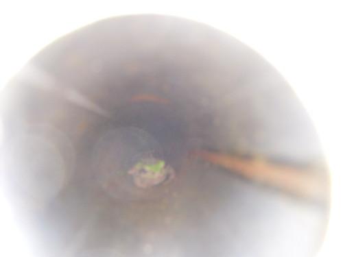 かえる カエル