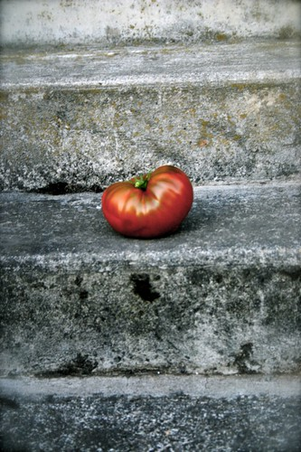 Tomato on our front steps