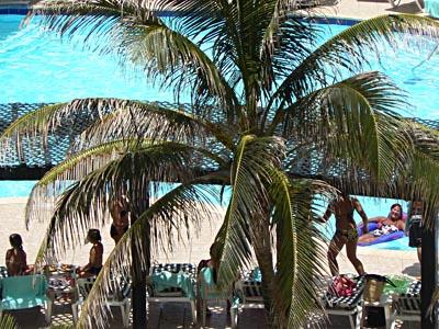 palmier au bord de la piscine du Royal Sands.jpg