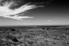 desolate (nosha) Tags: california park ca summer sky bw beach nature beautiful beauty landscape nikon pattern august organic f11 2009 ano nuevo anonuevo lightroom 18mm d300 blackmagic nosha 0ev 18200mmf3556 1800sec nikond300 summer2009 1800secatf11 californiaoregon2009