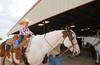 my little cowboy (Massia de Los Rios) Tags: horses texas country nick salado roping littlecowboy nikond300 wildfireranch