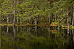 Uath Lochan, reflections (desimage) Tags: water pine reflections landscape scotland highlan