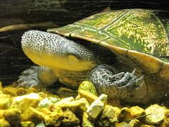 Newport Aquarium 332 (foodbyfax) Tags: newportaquarium