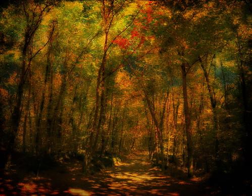フリー画像| 自然風景| 森林/山林|         フリー素材|