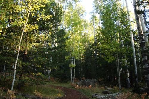 02 Trail