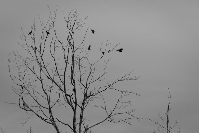 Day 12: Bird and Tree