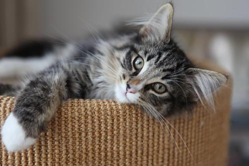 フリー画像| 動物写真| 哺乳類| ネコ科| 猫/ネコ|       フリー素材|