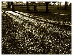 Flickr upload () Tags: flickr unload