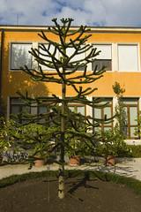 Padova: strano albero (Gaspa) Tags: sanantonio padova ortobotanico ilprato