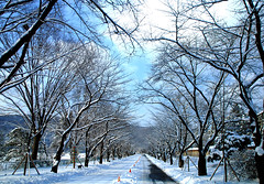 Winter time (floridapfe) Tags: street winter tree nature time korea soe everland flickrsbest theunforgettablepictures vosplusbellesphotos
