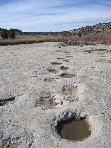Brontosaurs Tracks