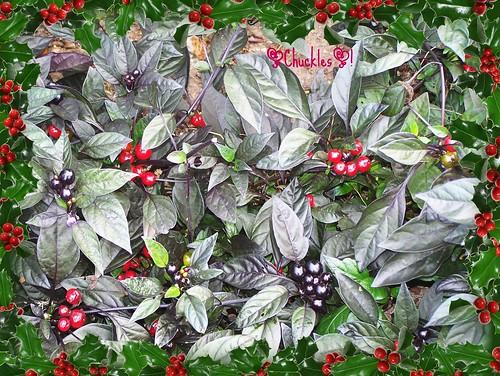 ~It's Really Looks a Lot Like Christmas~/~To Me~?!