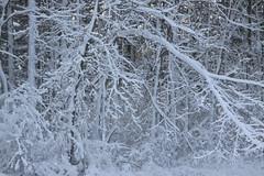 Winter Wonderland Delight (michaelmatusinec) Tags: xmastime wi digitalcameraclub canoneos50d digitalcamerclub autumn2009