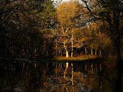 Reflections in the Forest (algo) Tags: uk blue trees england sky brown white black tree green water forest woodland photography woods europe branches trunks algo newforest