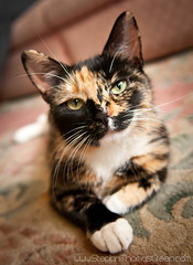 Pickle the Cat (stephen thomas green1) Tags: cat kent feline it rochester pickle medway kjdfk kjhfd picklethecat stephenthomasgreen lsfi
