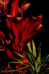 Superheroes   Superheris (Andre Carregal) Tags: red plants verde green sidekick plantas super vermelho heroes heris ajudante