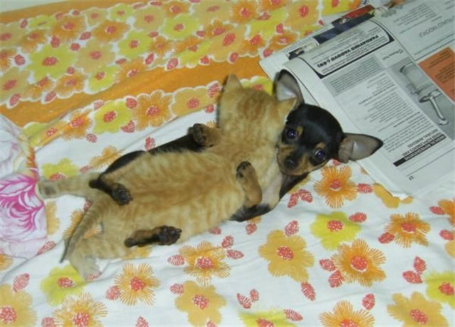 cats&dogs_07