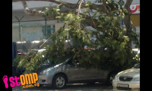 Windless day, yet tree branch suddenly crashes onto car at Airline House
