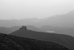 Misty Dawn (QooL /   ) Tags: travel bw landscape dawn blackwhite tea highland malaysia plantation layers qool sgpalas qoolens