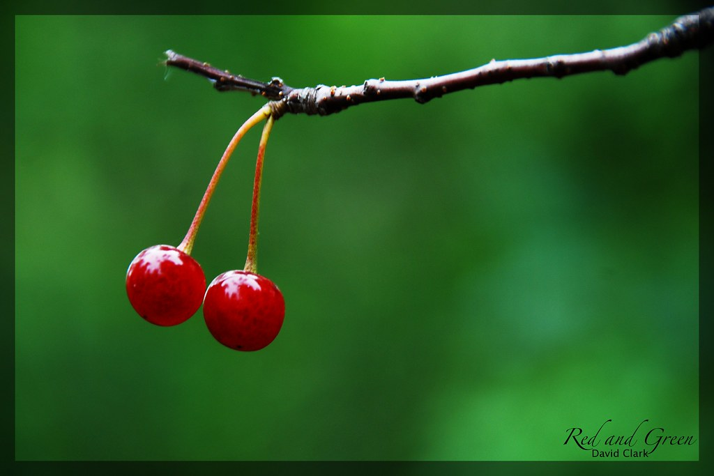 Two bright red berries on a branch, against a brilliant green backdrop.
