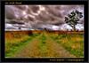 An Irish Road (Irishphotographer) Tags: clouds 1 raw file roads distance hdr stormyweather faraway kinkade cloudyday beautifulireland imagesofireland grassyroad kimshatwell ©irishphotographer breathtakingphotosofnature anirishroad beautifulirelandcalander wwwdoublevisionimageswebscom