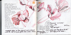 Tulips Drawing inks, stick, soft pencil & brush (skyeshell) Tags: flowers colour garden sketch tulips drawing sketchbook flowerdrawing sketchbookjournal drawinginks drawingwithsticks visionqualtygroup