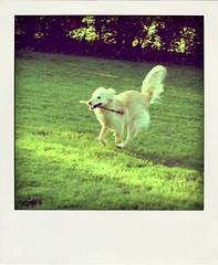 alex running