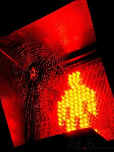 光的表情00185注意的光DSC09215.jpg