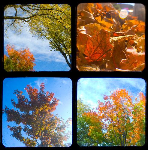261:365 Autumn TtV Collage