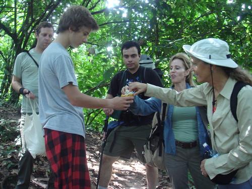 Probando la fruta del cacao