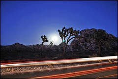 Under the moonlight, the serious moonlight! (Little Italy Photography) Tags: twentyninepalms joushatree moon ca desert nikon18105mmf3556afsdxvred longexposure lighteffects lighttrails cactus lights mountains landscape nikon nikond60 bluehour