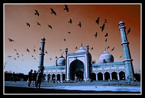 Pigeon studded sky @ Jama Masjid