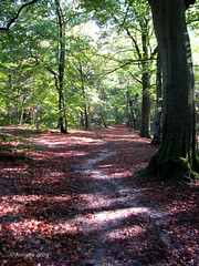 Herfstbos.... ( Annieta  Off / On) Tags: wood autumn oktober holland color fall nature canon ilovenature herbst herfst nederland thenetherlands natuur powershot s2is bos farbe colori canonpowershots2is 2009 couleur allrightsreserved gmt kleur annieta autonno rubyphotographer usingthisphotowithoutpermissionisillegal