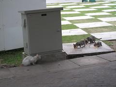 Cats Eating Biryani