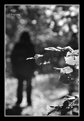 .. and so I follow the path of unknown.. (andzer) Tags: wood autumn shadow people bw woman white black tree lady forest leaf nikon branch bokeh path walk femme scout andreas explore unknown 2009 myfaves zervas ysplix andzer horizonsofculture horoc  wwwandzergr