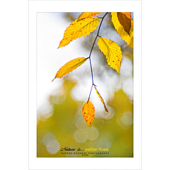Yellow Hue (Imapix) Tags: autumn canada art fall nature leaves yellow automne canon photography photo leaf foto photographie quebec foliage québec hue feuille imapix feuillage gaetanbourque vosplusbellesphotos imapixphotography gaëtanbourquephotography